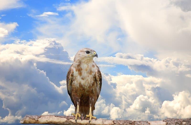 Download Großer Vogel stockfoto. Bild von baum, wild, himmel, tier - 9094700