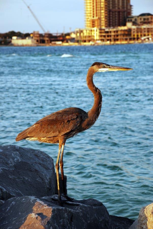 Großer Vogel durch Ozean lizenzfreie stockfotografie