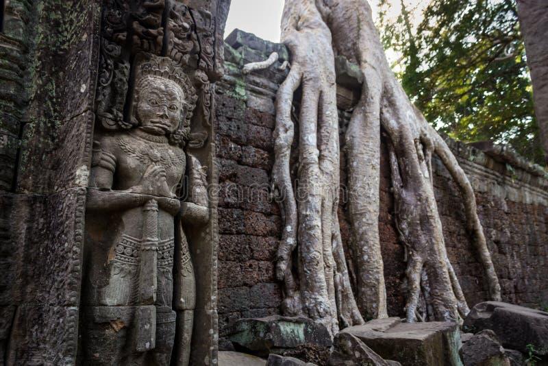 Großer Wächter Innerhalb der Ruinen von Angkor Wat Bäumen und Dschungel haben gesamte Gebäude übernommen Ta Prohm, Siem Reap kamb lizenzfreie stockfotografie