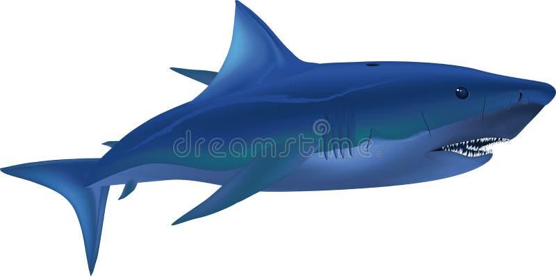 Großer weißer Haifisch stock abbildung