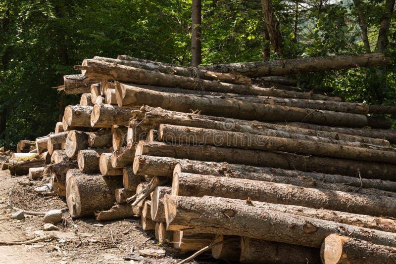 Großer Woodpile von gesägten ausgeschifften Kiefernholz-Klotz lizenzfreies stockbild