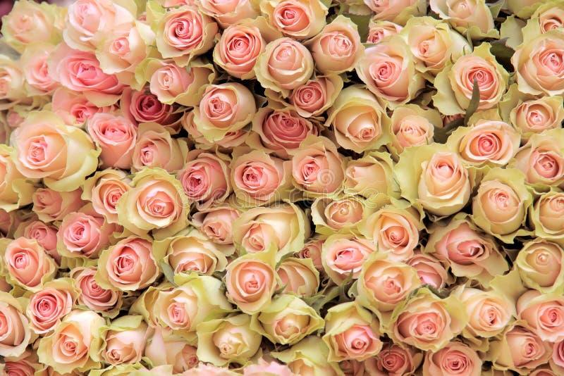 Großes Bündel hellrosa Rosen des Schnittes lizenzfreie stockfotos