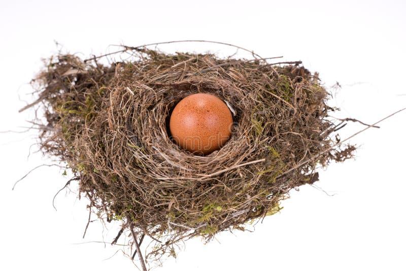 Großes braunes Ei im kleinen Vogelnest stockbild
