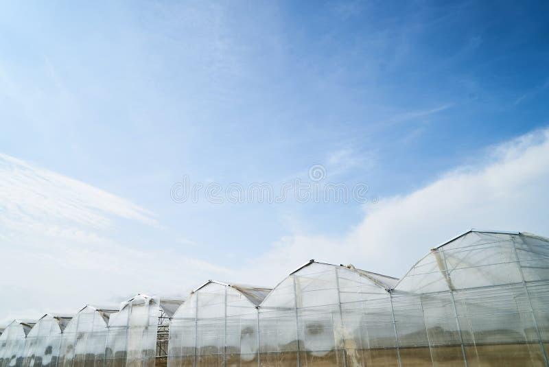 Großes Gewächshaus in der Landschaft mit Hintergrund des blauen Himmels stockbild