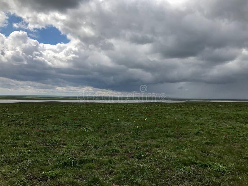 Großes grünes Feld und ein Himmel mit weißen Wolken lizenzfreie stockfotos