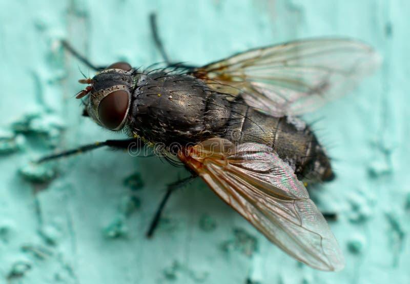 Großes Insekt stockbild