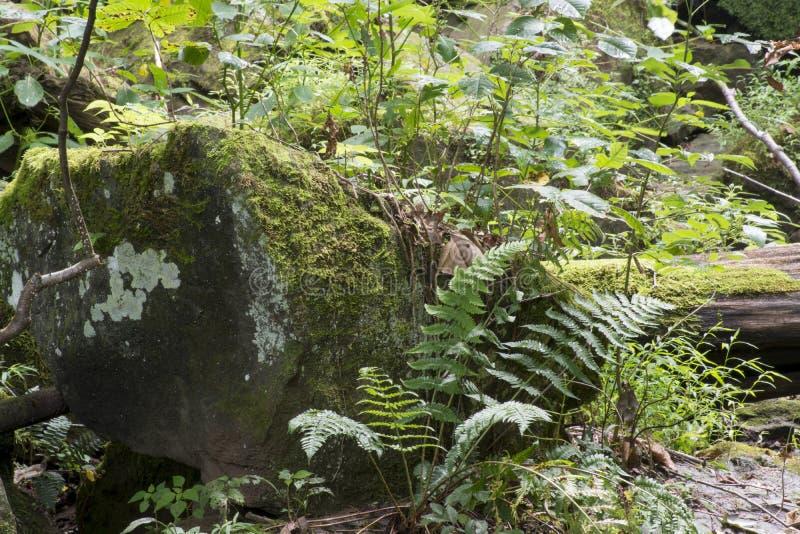 Großes Moos bedeckte Felsen mit Farn lizenzfreies stockbild