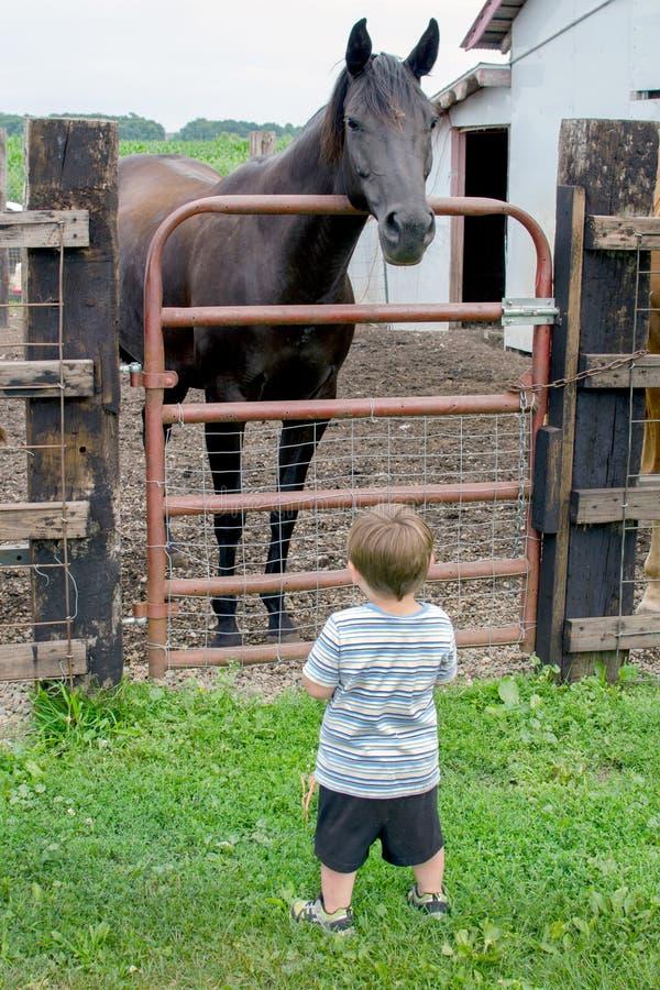 Großes Pferdekleiner Junge stockfotos