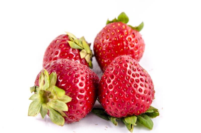 Großes rotes neues Erdbeere-vier ` s stockfoto