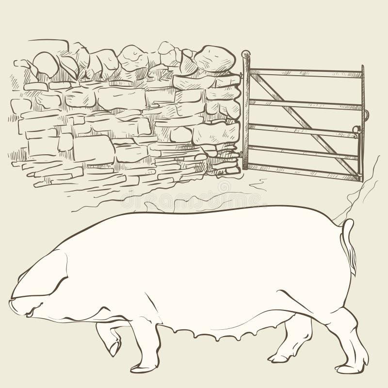 Großes Schwein am Tor lizenzfreie abbildung