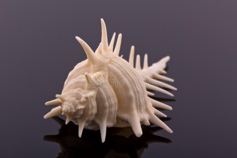 Download Großes Skelett Des Seeshells - Makro Stockfoto - Bild von salz, strand: 27726362
