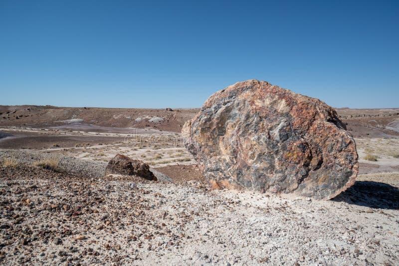 Großes Stück der Spalte des versteinerten Holzes, die jetzt den prehistroic Klotz zu Kristallsteinmineralien am versteinerten Wal stockbild