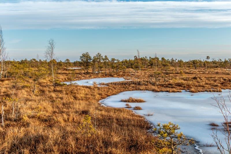 Großes Sumpfheidemoor Kemeri am sonnigen Wintertag mit blauem Himmel, Lettland, Baltische Staaten, Nordeuropa stockbilder