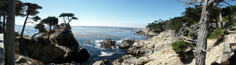 Großes Sur Kalifornien - einsame Kiefer lizenzfreie stockfotografie