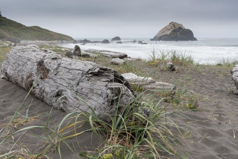 Großes Treibholz auf dunklem Strand mit Sand-Gras stockfotografie