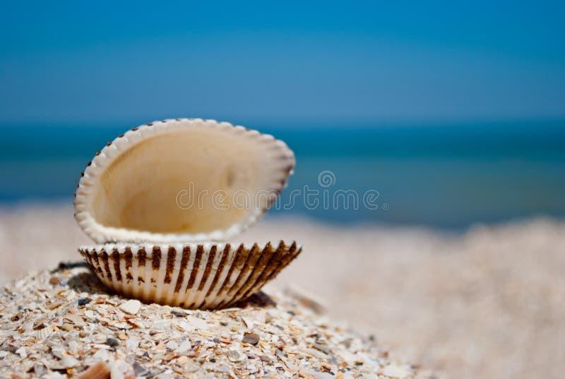 Großes weißes schönes offenes Oberteil auf dem links auf einem Hintergrund des sonnigen Tages des blauen Meersandsommers lizenzfreie stockbilder