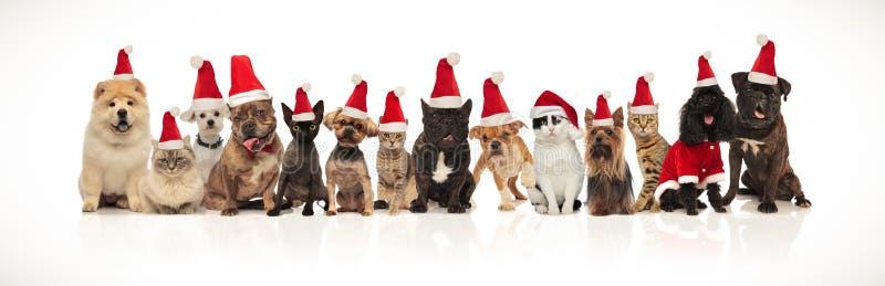 Großes Weihnachtsteam vieler netten Katzen und Hunde stockfotografie