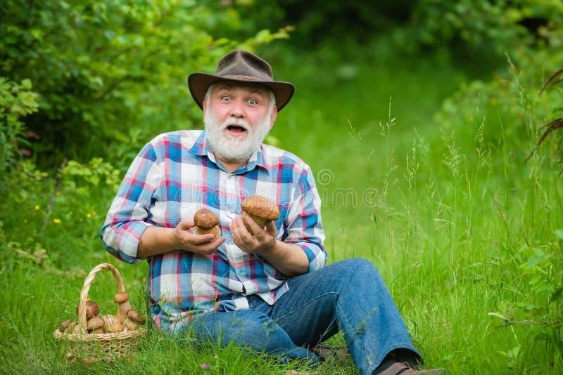 Großvater mit Korb von Pilzen und von überraschten Gesichtsausdruck Pilzkopfbildung in Wald, großväterliche Jagd lizenzfreie stockbilder