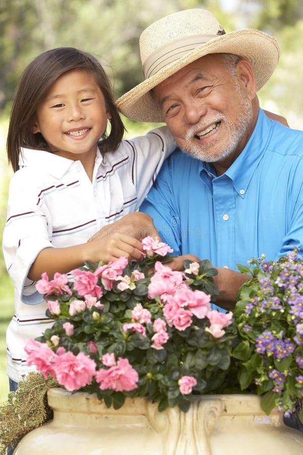 Großvater und Enkel, die zusammen im Garten arbeiten stockbilder