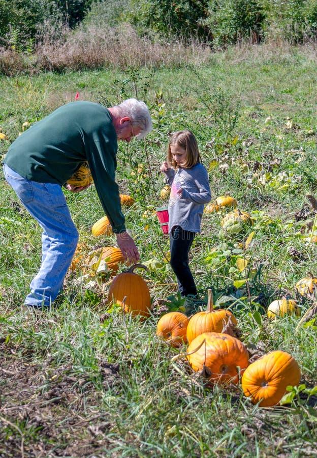 Großvater und Mädchen, die Kürbise auswählen lizenzfreie stockfotos