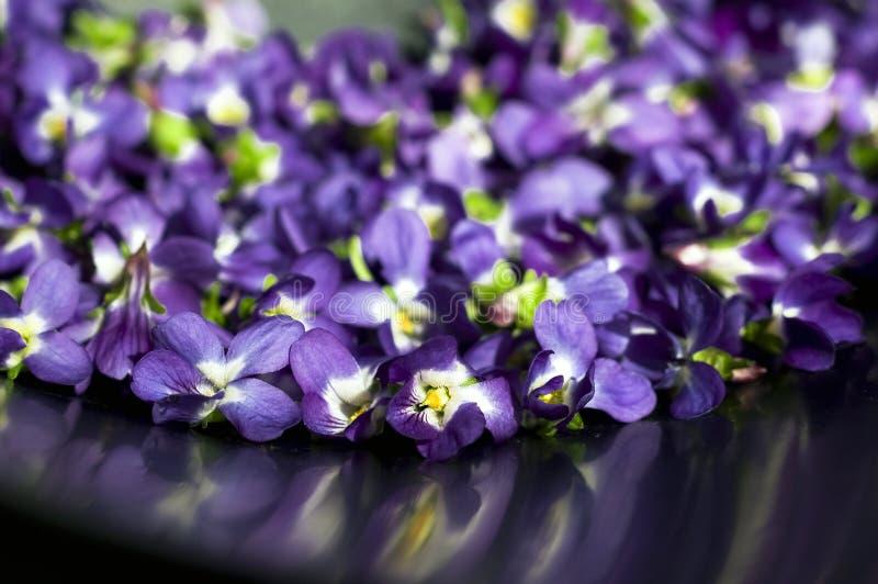 Großartige, bunte Vorfrühlingsblumen im Sonnenschein im Garten, selektiver Fokus, Raum für Text stockbild