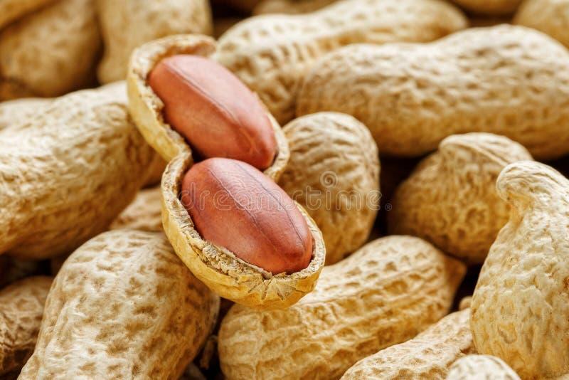 Große abgezogene Erdnussnahaufnahme von Bohnen im Oberteil Ungeschälte Erdnüsse im Oberteil Erdnüsse, für Hintergrund oder Bescha lizenzfreie stockbilder