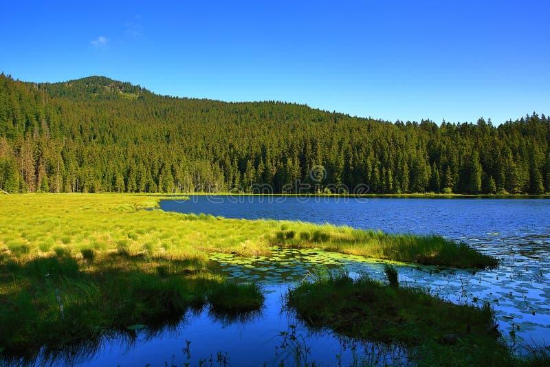 Großer Arbersee is een meer in Bayerischer Wald, Beieren, Duitsland stock foto