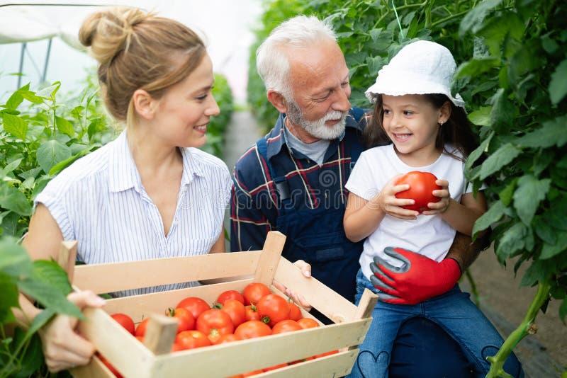Großväterliches wachsendes organisches Gemüse mit Enkelkindern und Familie am Bauernhof lizenzfreie stockbilder