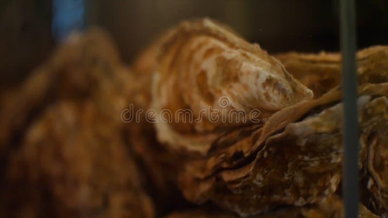 Gro?aufnahme von exotischen braunen Muscheln in der Ecke des Aquariums Feld Cents dollars lizenzfreie stockfotos
