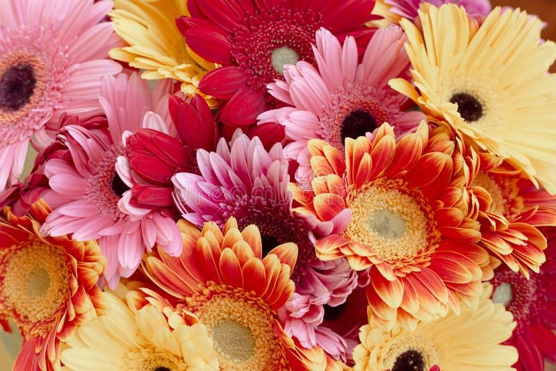 Gro?er Blumenstrau? mit vielem Roten, Rosa und gelben Gerberas mit dem sch?nem modernem Tonen stockfoto