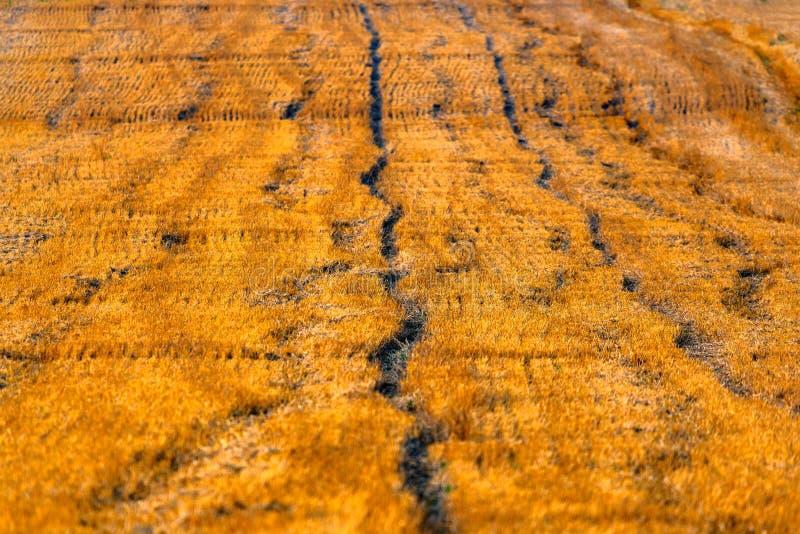 Gro?es gelbes Feld nachdem dem Ernten Gem?hte Weizenfelder unter sch?nem blauem Himmel und Wolken am sonnigen Tag des Sommers Kon stockfotografie