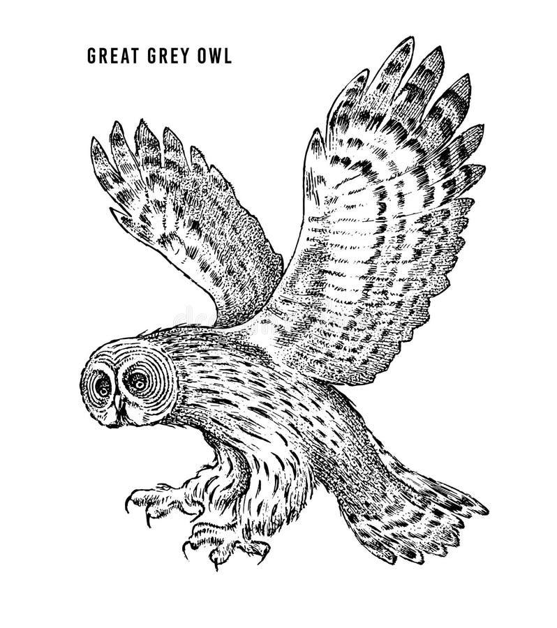 Gro?es Grey Owl Wilder Waldraubvogel Grafische Art der Handgezogenen Skizze Modeflecken Druck f?r T-Shirt, T?towierung oder lizenzfreie abbildung