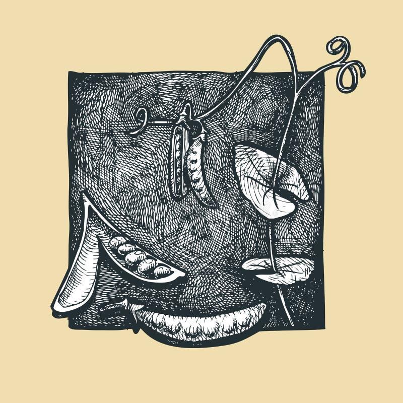 Grochowy strąk. ilustracji