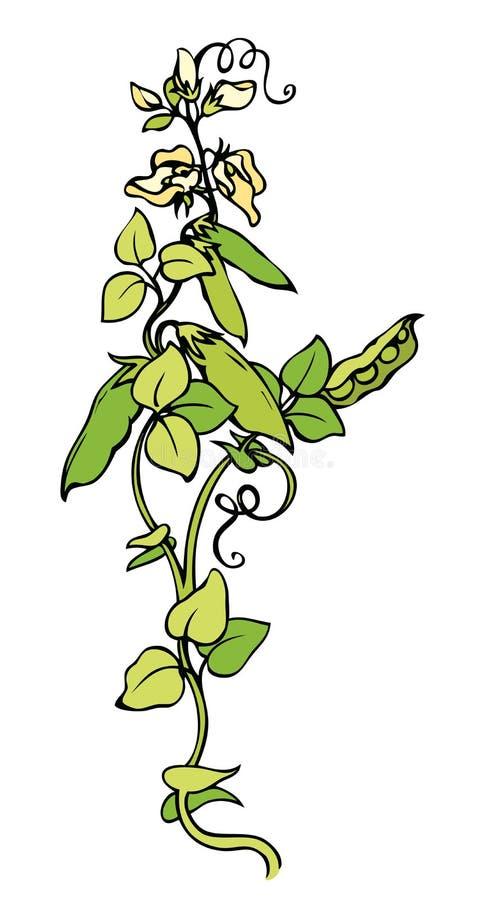 Grochy rysuje tła trawy kwiecistego wektora ilustracja wektor