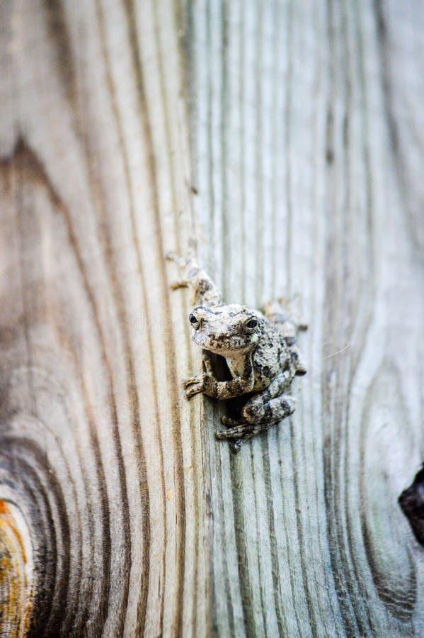 Groda på trä arkivfoton