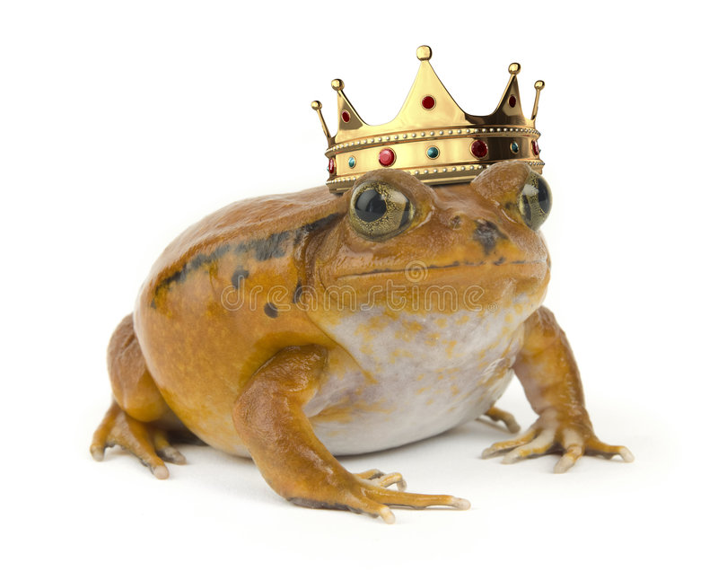 grodaorange royaltyfria foton