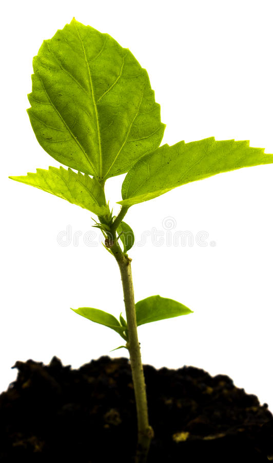 Grodd av den gröna unga växten i den isolerade jordningen arkivfoton