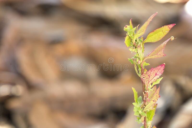 Grodd av en växt bland torra sidor i vinter royaltyfria foton