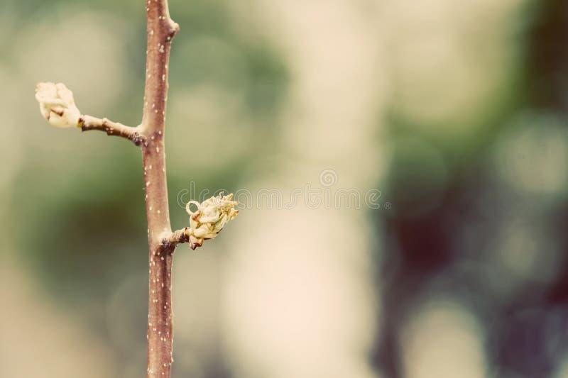Download Groddar fotografering för bildbyråer. Bild av tree, växt - 19798213