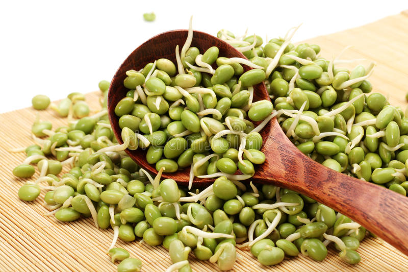 Groddar för grön sojaböna arkivbilder