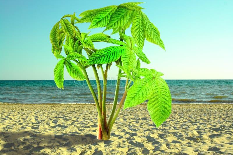 Grodden av det kastanjebruna trädet är som palmträdet, buske på sand royaltyfri bild