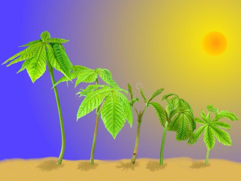 Grodden av det kastanjebruna trädet är som palmträdet, på sanden royaltyfria foton