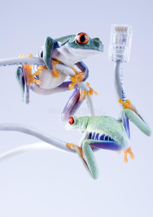 grodor fotografering för bildbyråer