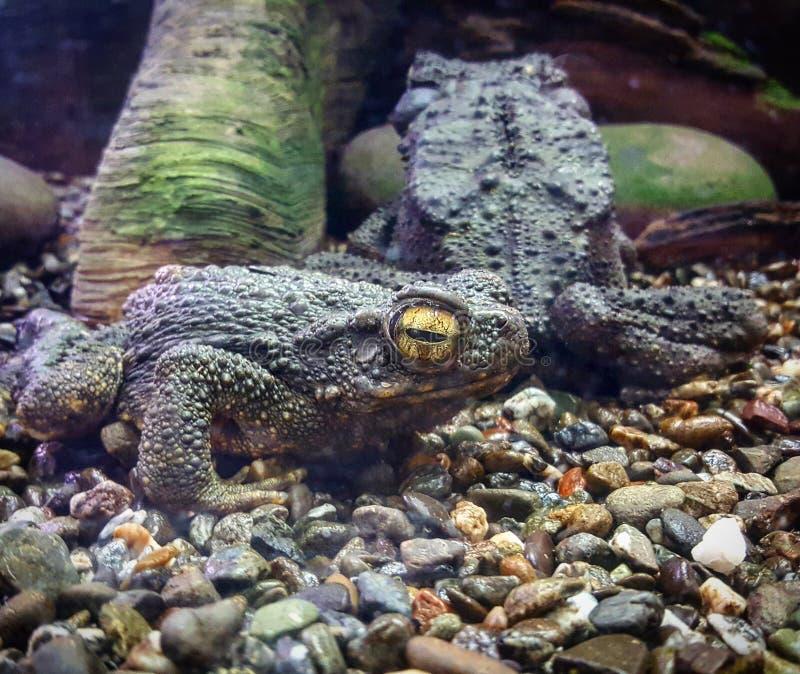 grodor royaltyfri bild