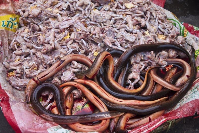 Grodor och ålar arkivbild