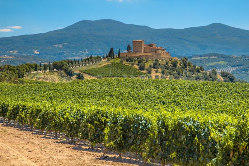 Grodowy nadzoruje winnica w rzędach przy Tuscany wytwórnii win nieruchomością, I obraz stock