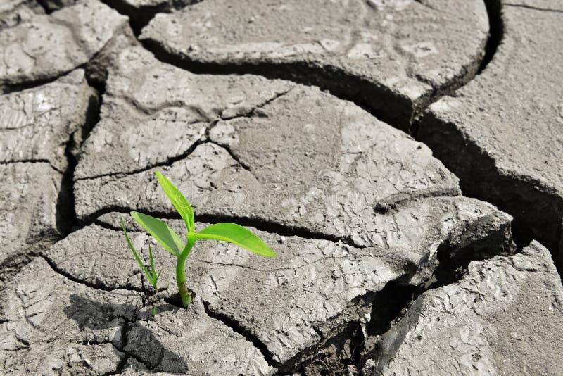 Groei, de groei, Droog gebarsten land de Groene spruit, het nieuwe leven, nieuwe hoop, de wereld heelt stock foto's