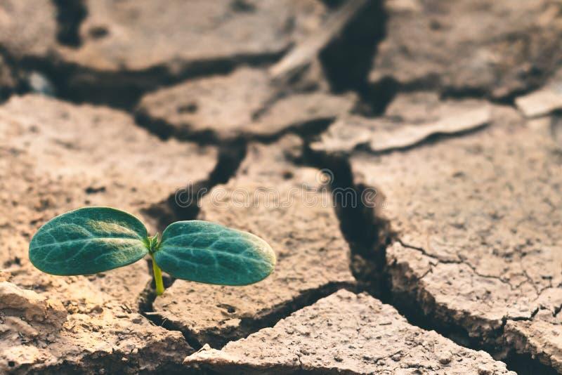 Groei die van bomen in droogte, met boomdroogte de leven stock afbeelding