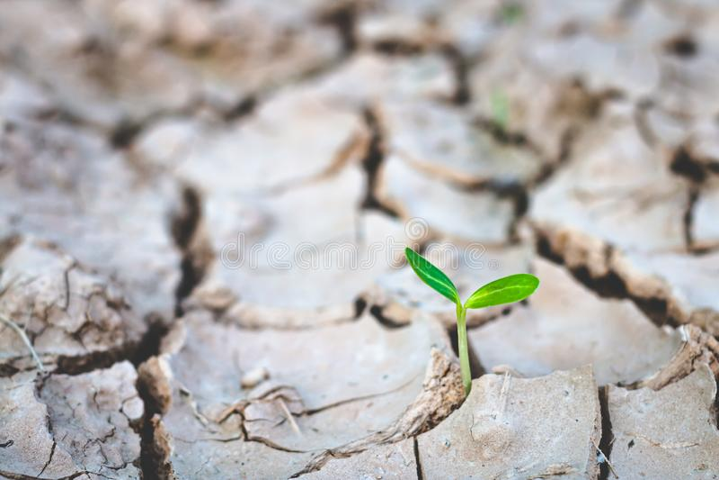 Groei die van bomen in droogte, met boomdroogte de leven stock foto's