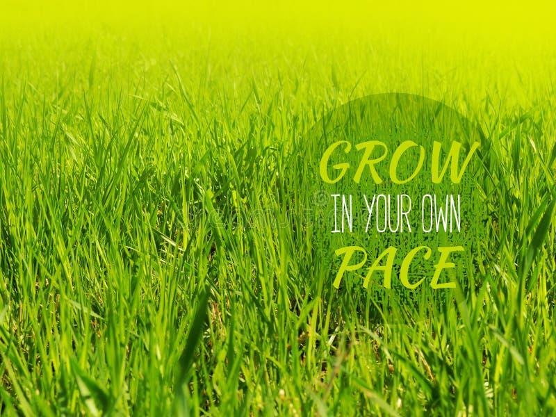 Groei in uw eigen tempo - inspirerende motivatie citaat stock foto's